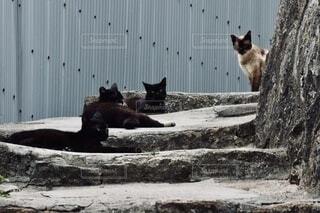 猫の道の写真・画像素材[3909663]