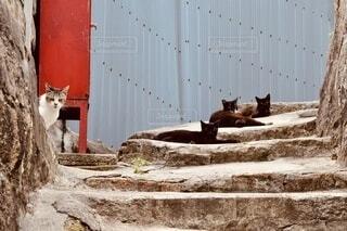 猫の佇む道の写真・画像素材[3909664]