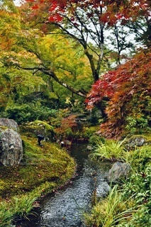 日本の秋の写真・画像素材[3909672]