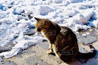 はじめての雪の写真・画像素材[3918970]