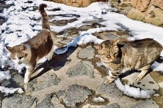 猫の探検隊の写真・画像素材[3918972]