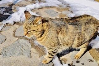 雪の中の岩の上に座っている猫の写真・画像素材[3918974]