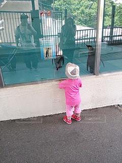 福岡市動物園で娘がペンギンを見ているところを撮りました。の写真・画像素材[3973767]