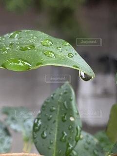 雨上がりの散歩道で❗️の写真・画像素材[3997012]
