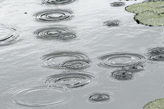 水面に落ちる雨粒。の写真・画像素材[4502052]