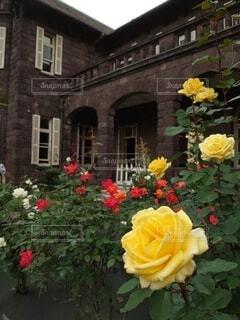 旧古河庭園を彩る可憐な薔薇の写真・画像素材[3899772]