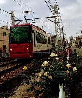 バラの通り道を走る路面電車の写真・画像素材[3910290]