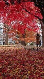 木と地面を埋め尽くすカラフルな葉っぱたちの写真・画像素材[3923536]