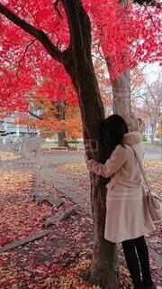 真っ赤な紅葉の木にしがみつく女性の写真・画像素材[3923537]
