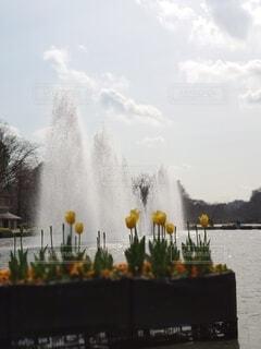 自然,空,公園,花,春,屋外,雲,水,水面,チューリップ,音,音色,噴水,スポット,迫力