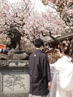 春,屋外,神社,梅,後ろ姿,花嫁,撮影,美しい,花婿,結婚,狛犬,前撮り,和装,袴,新婚