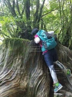 屋久島の白谷雲水峡を歩くの写真・画像素材[4372007]