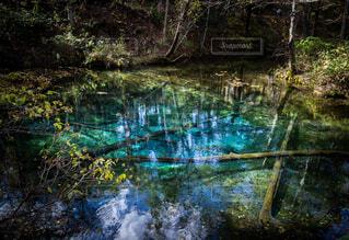 木々に囲まれた水の姿の写真・画像素材[3917532]