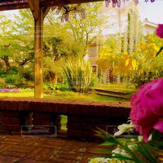 花の写真・画像素材[595647]