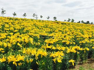 花の写真・画像素材[604021]