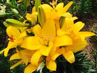 花の写真・画像素材[604024]