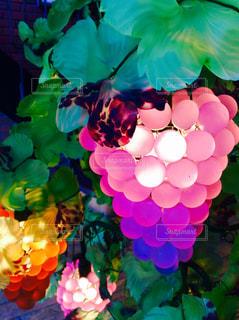 照明,明かり,ブドウ,葡萄,ぶどう
