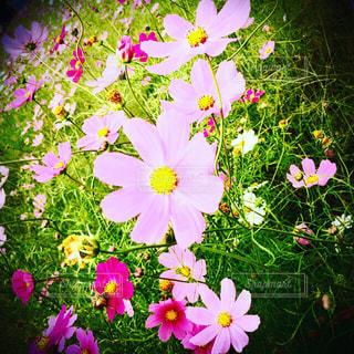 近くの花のアップの写真・画像素材[1173798]