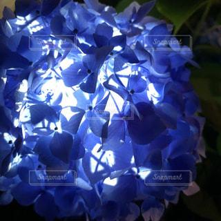 近くの花のアップの写真・画像素材[1240346]