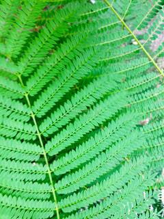 近くの植物のアップの写真・画像素材[1267390]