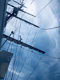 ワイヤーから掛かるカモメの群れの写真・画像素材[1314194]
