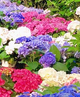 近くのフラワー ガーデンの写真・画像素材[1369377]