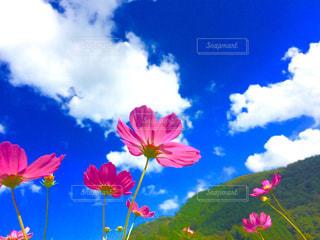 色とりどりの花のグループの写真・画像素材[1379827]