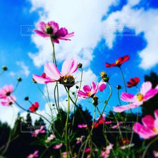 カラフルな花の植物の写真・画像素材[1455010]