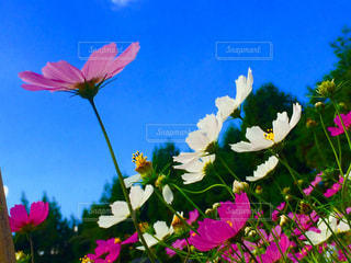 近くの花のアップの写真・画像素材[1455011]