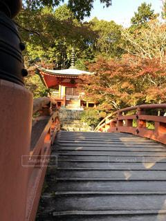 自然,橋,紅葉,京都,もみじ,お寺,醍醐寺,お出かけ