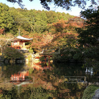 自然,紅葉,京都,もみじ,お寺,醍醐寺,お出かけ,インスタ映え