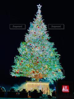 クリスマスツリーの写真・画像素材[1680525]