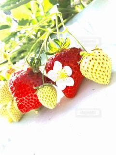 果物の一部の写真・画像素材[1765345]
