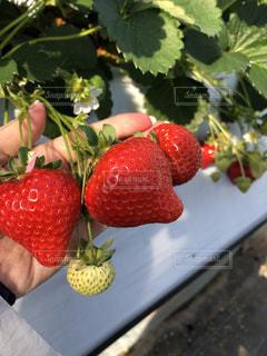 近くに果物のの写真・画像素材[1765348]