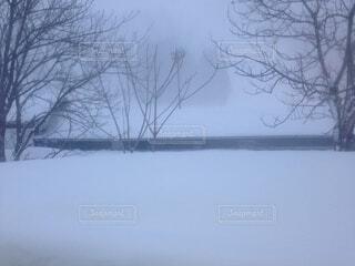 雪に覆われた木のクローズアップの写真・画像素材[3908194]