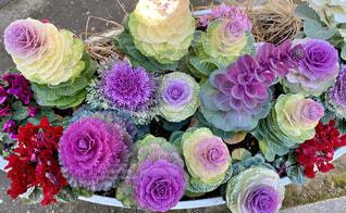 花,春,屋外,ピンク,赤,白,紫,黄色,草,花壇,草木,黄緑