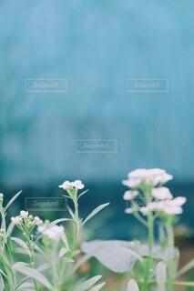 青と緑と白の写真・画像素材[3913126]