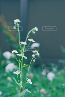 小さなお花の写真・画像素材[3931760]