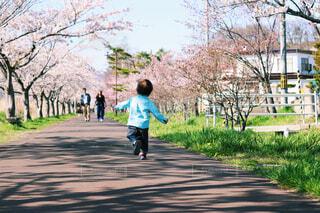 桜並木を歩いた日の写真・画像素材[4230827]