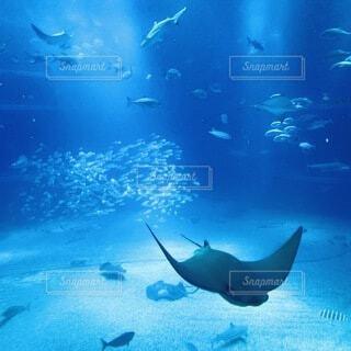 海遊館水槽の写真・画像素材[3923587]