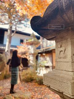 美しい紅葉を見上げる女性の後ろ姿の写真・画像素材[3926044]