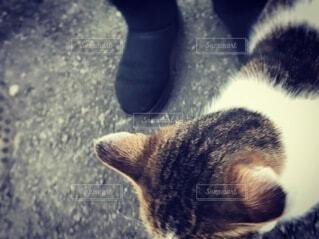 猫とブーツ姿の足もとの写真・画像素材[3951374]