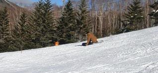 自然,風景,空,冬,雪,屋外,雲,雪山,山,景色,樹木,旅行,スキー,運動,スキー場,冷たい,スノーボード,斜面,ウィンタースポーツ,日中,山腹