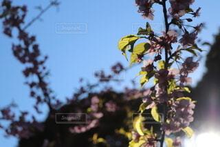 空,花,屋外,葉,樹木,草木