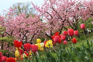 春の集いの写真・画像素材[3931446]