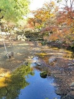 水鏡の紅葉と鹿の写真・画像素材[3933842]