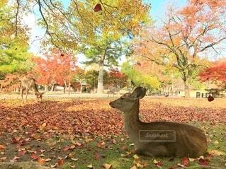 落ち葉舞う中たたずむ鹿の写真・画像素材[3933836]