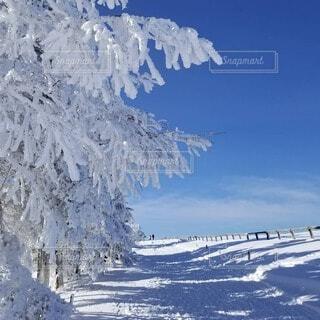 真っ青な空と真っ白な木々の写真・画像素材[3933846]
