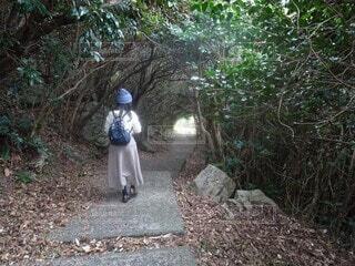 絵本の世界のような木のトンネルの写真・画像素材[3933847]