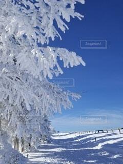樹氷の道の写真・画像素材[4151233]